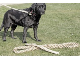 Rope Products for Pets